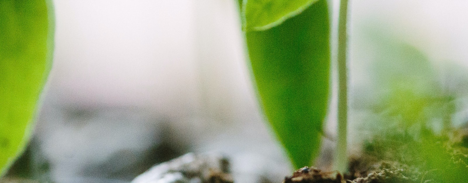 Wachstum ermöglichen